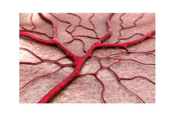 Introduction of Angiogenesis