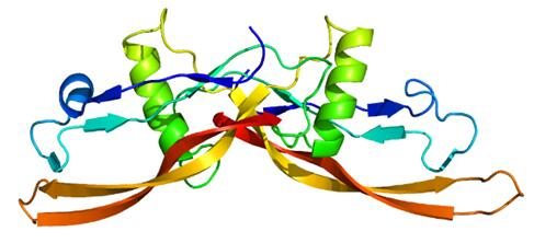 Crystal Structure of BMP1 Protease Domain