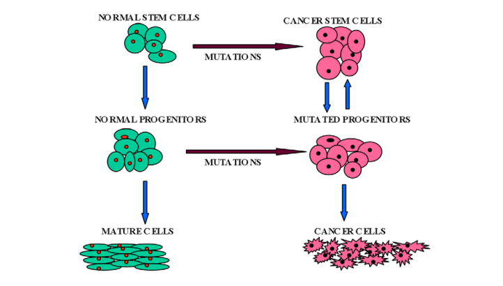 Introduction and origin of cancer stem cells