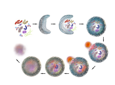 Introduction of Autophagy