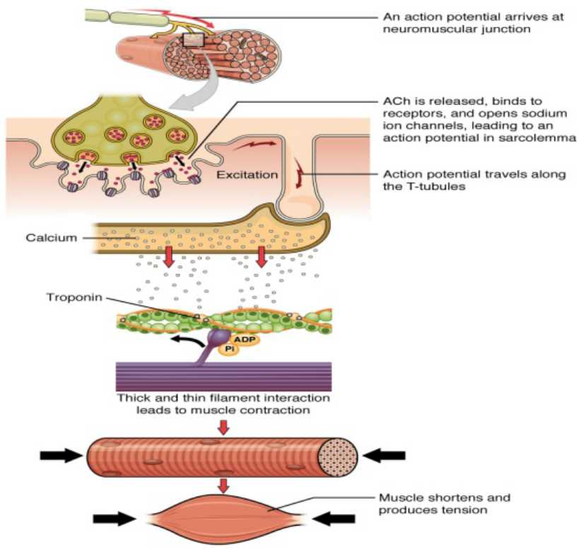 Cardiovascular and Signal Transduction