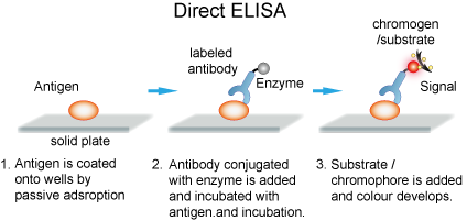 The flowchart of direct ELISA