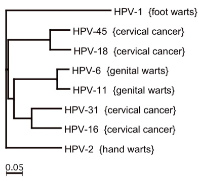 Family Tree of Human Papillomavirus