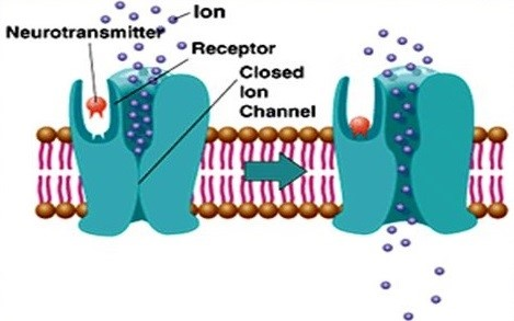 Diagram of ionotropic glutamate receptors