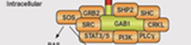 Hepatocyte growth factor Signaling Pathway