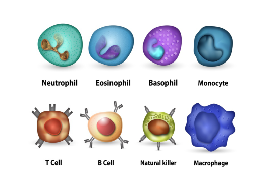 Myeloid-derived suppressor cells