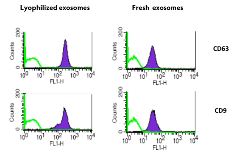 Comparison of exosomal markers on fresh and lyophilized exosomes