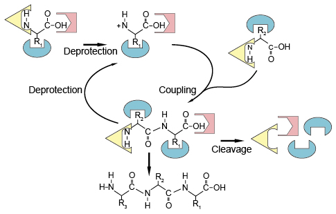 Peptide synthesis process
