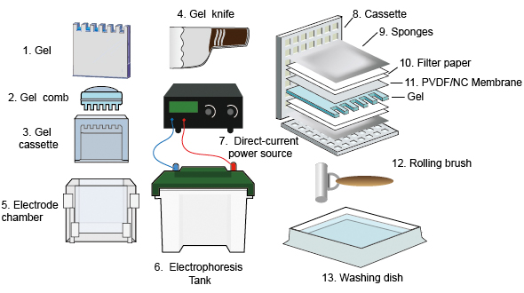 Western blot equipments