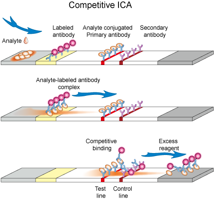 Schematic diagram of competitive ICA