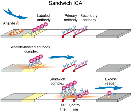 Schematic diagram of Sandwich ICA